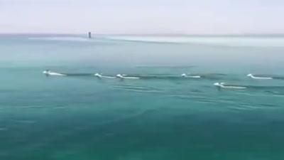 قطيع من الغزلان يعبر خليج العقبة من سيناء إلى تبوك السعودية 6 نوفمبر 2019